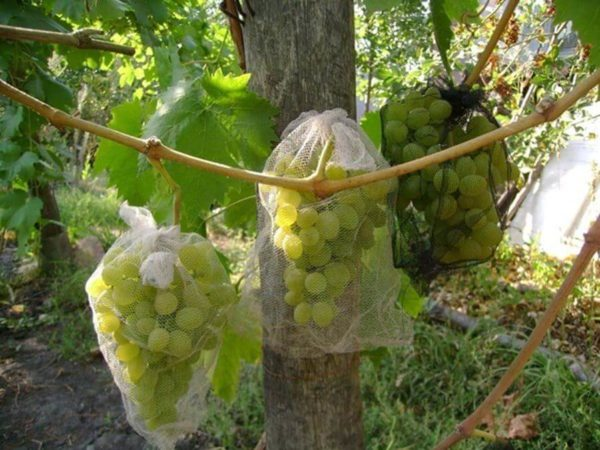 Мешочки для защиты винограда усиленные 30х55 с завязками